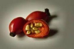 Sedmikráska syrop ziołowy Dzika róża 500ml imunitní systém, antioxidant, trávicí a vylučovací systém, dásně, kůže, cévy Rodinná farma Sedmikráska