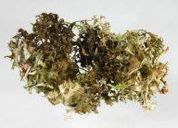 Sedmikráska bylinný extrakt Lišejník 250 ml *normální funkce horních cest dýchacích*imunita*chuť k jídlu* doplněk stravy* Rodinná farma Sedmikráska